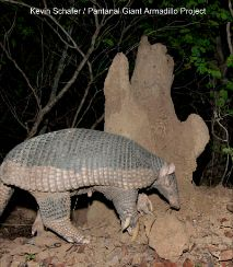 Giant Armadillo Project