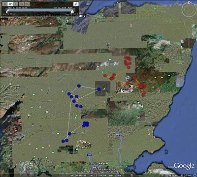 map-movements-golden-eagles.jpg